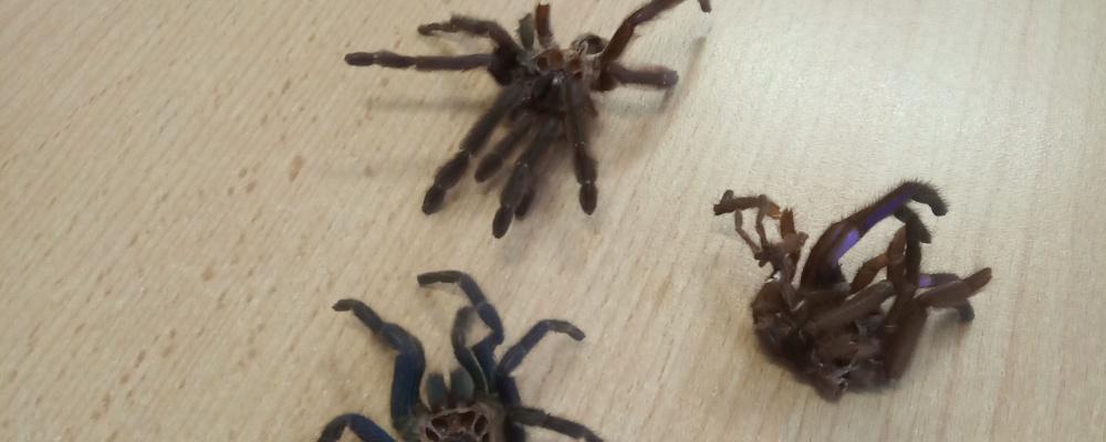 Pavouci1.jpg